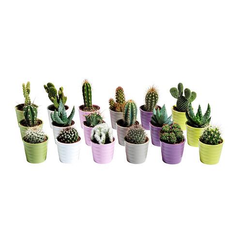 cactaceae-plante-avec-vase__0159335_PE315851_S4