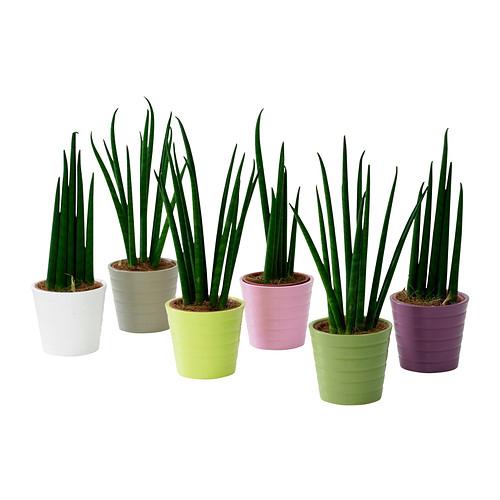 sansevieria-plante-avec-vase__0146343_PE305317_S4